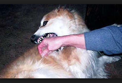 Un cane ti morde..? Se è successo accarezzandolo non sarai risarcito.