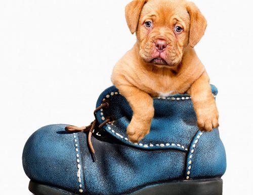 Microchip per cani gratuito sino al 30 settembre 2018