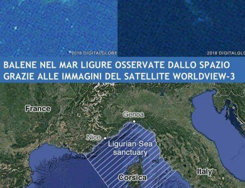 Le balene nel mar ligure osservate dal satellite. Tra Corsica, Italia e Francia.