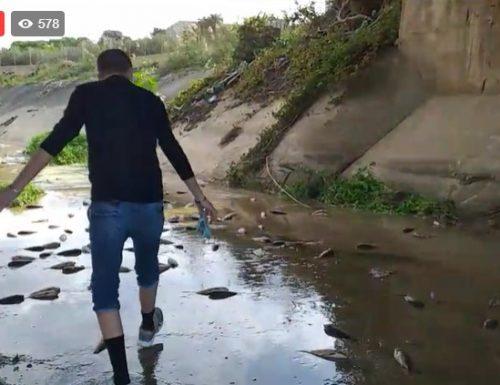 Trovati migliaia di pesci morti. Cosa sta accadendo..?